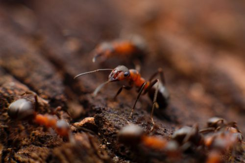 小さい 蟻 駆除